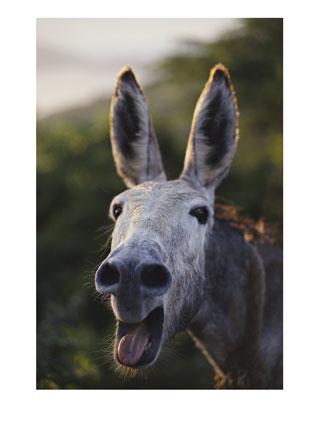 burro en primavera
